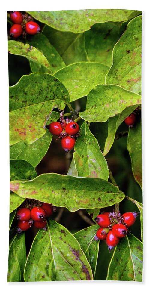 Autumn Dogwood Berries Bath Sheet featuring the photograph Autumn Dogwood Berries by Bellesouth Studio