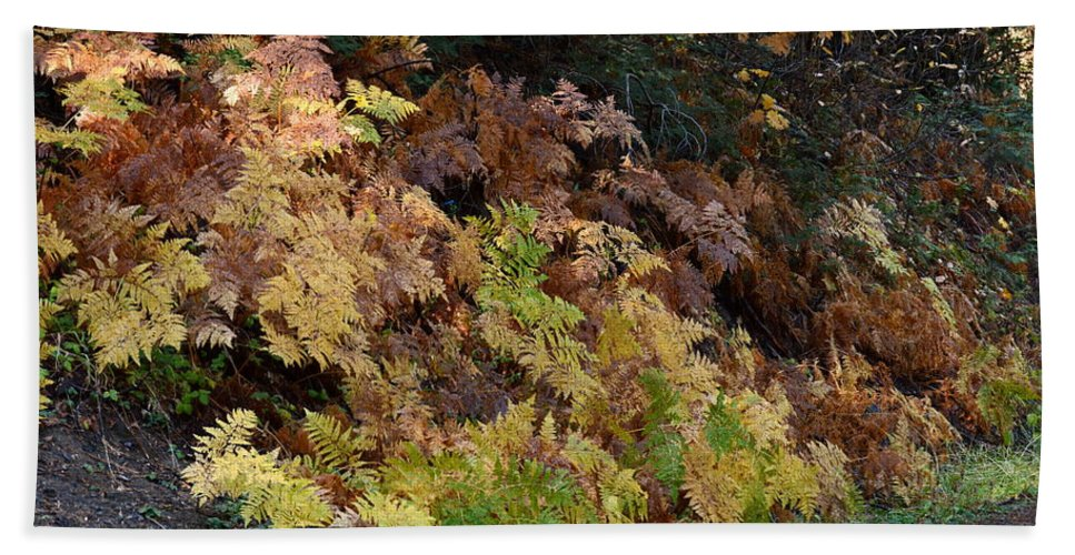 Fern Hand Towel featuring the photograph Autumn Ferns by Michael Allred