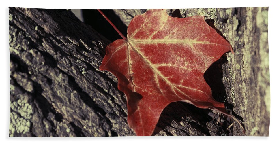 Leaf Hand Towel featuring the photograph Autumn Find by Aimelle