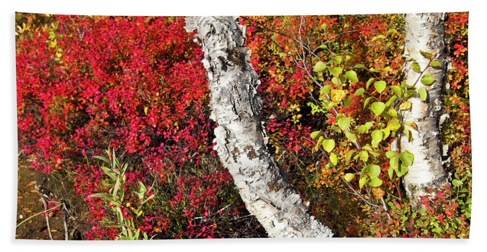 Tree Bath Sheet featuring the photograph Autumn Foliage In Finland by Heiko Koehrer-Wagner