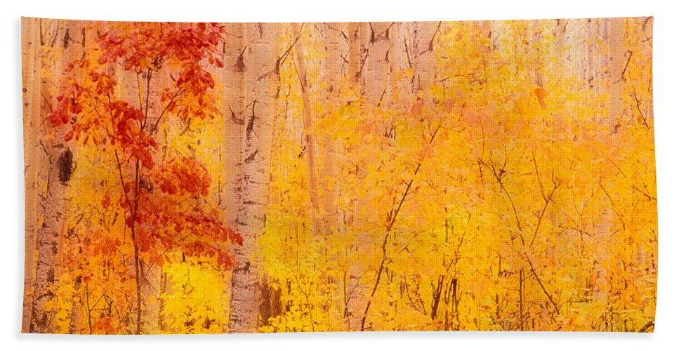 Photography Bath Sheet featuring the photograph Autumn Forest Wbirch Trees Canada by Panoramic Images