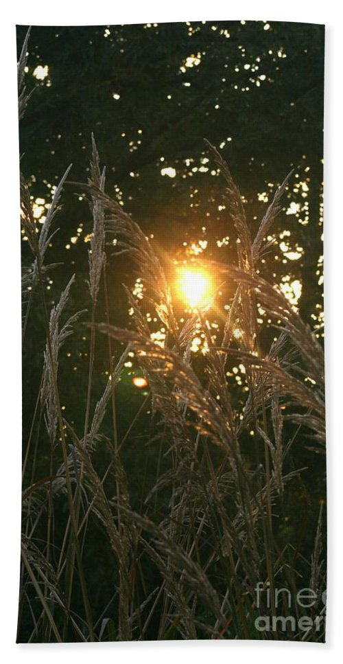 Light Hand Towel featuring the photograph Autumn Grasses In The Morning by Nadine Rippelmeyer