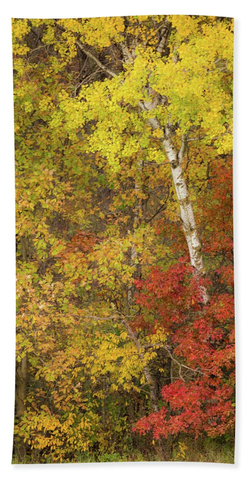 Autumn Hand Towel featuring the photograph Autumn Impressions by Penny Meyers