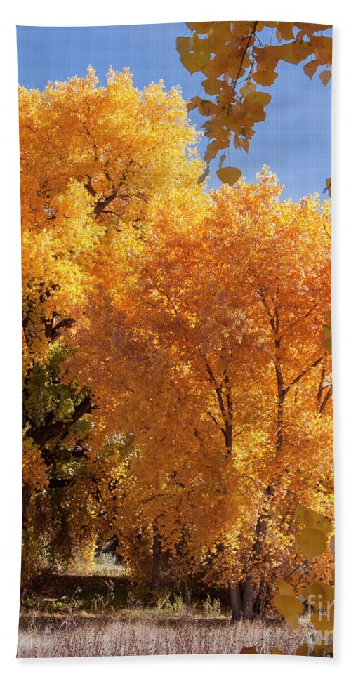 Natanson Hand Towel featuring the photograph Autumn In Curtin by Steven Natanson