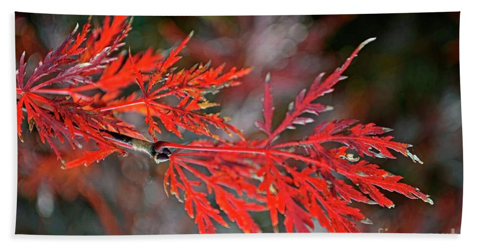 Tree Bath Towel featuring the photograph Autumn Japanese Maple by Debbie Portwood