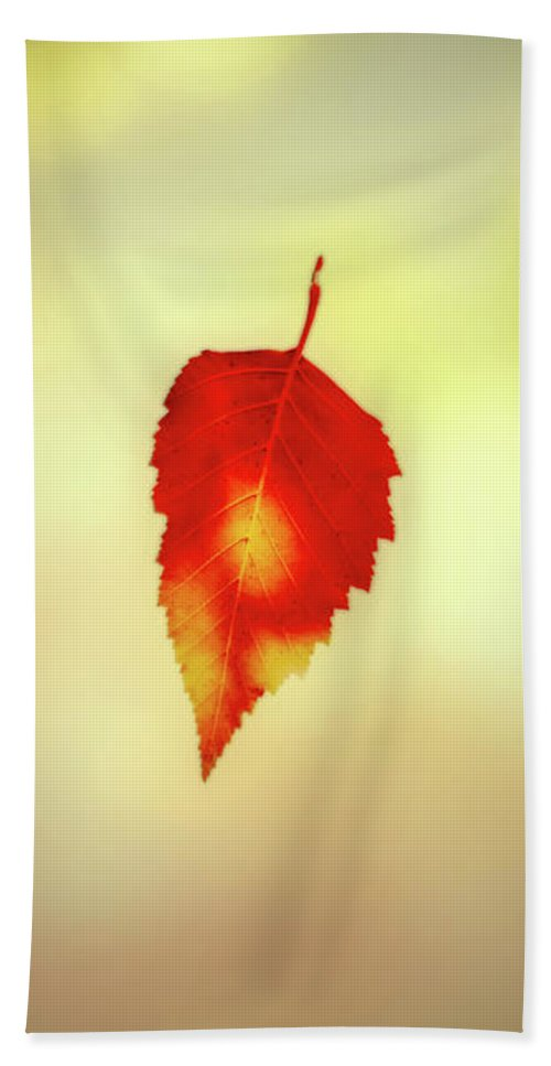 Leaves Hand Towel featuring the photograph Autumn Leaf by Bob Orsillo