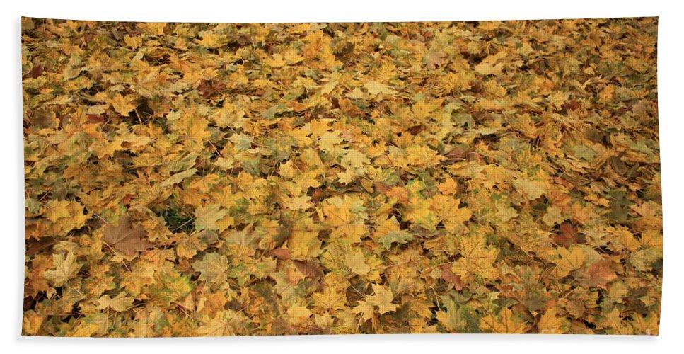 Autumn Bath Sheet featuring the photograph Autumn Leaves Canvas by Carol Groenen