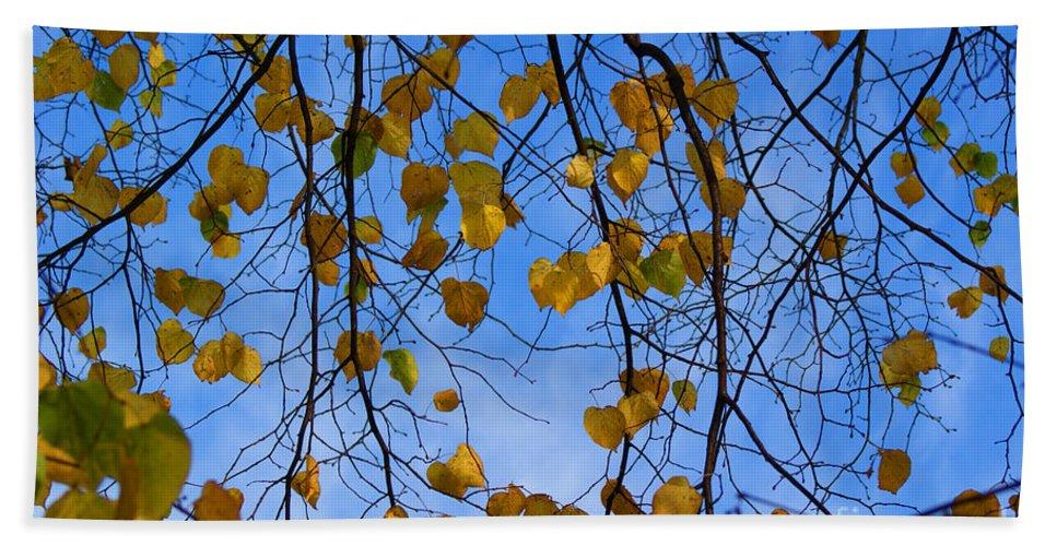 Autumn Bath Sheet featuring the photograph Autumn Leaves by Carol Lynch