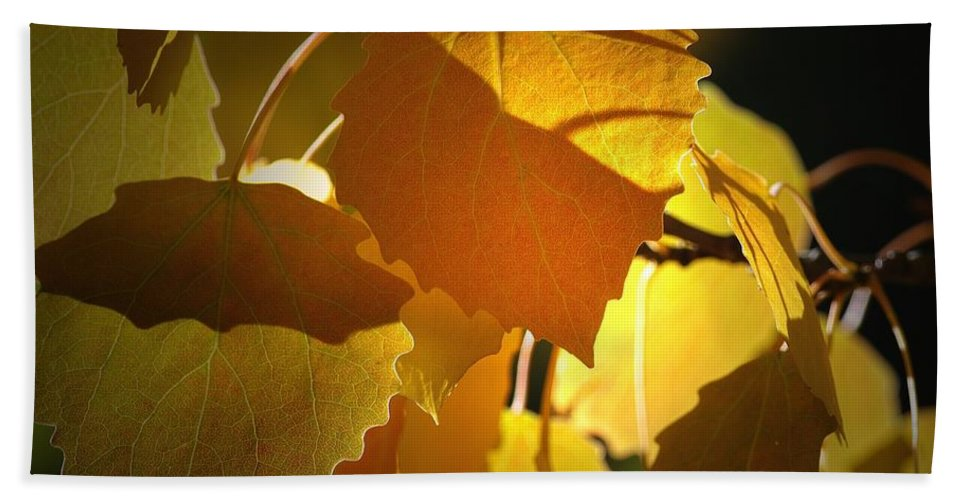 Leaves Bath Sheet featuring the photograph Autumn Leaves by Sharon Talson