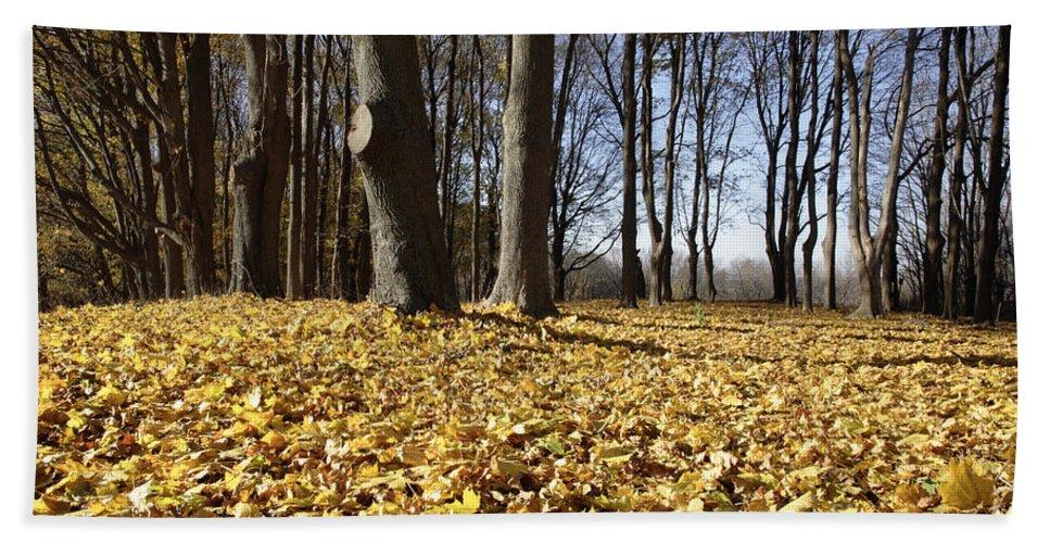Fall Bath Towel featuring the photograph Autumn Maple Forest - Massachusetts Usa by Erin Paul Donovan