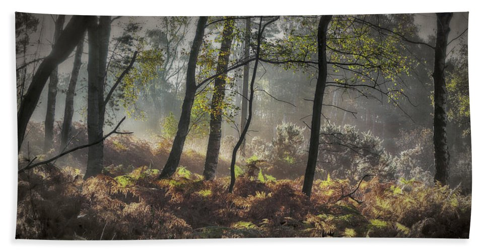 Autumn Bath Sheet featuring the photograph Autumn Morning by Ceri Jones