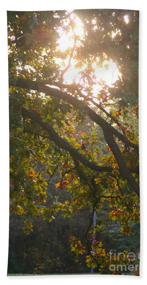 Autumn Hand Towel featuring the photograph Autumn Morning Glow by Nadine Rippelmeyer