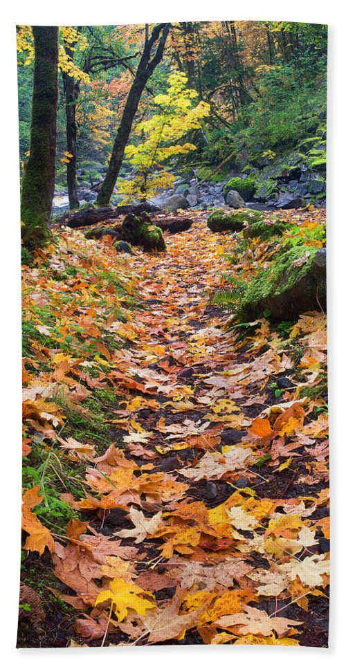 Path Bath Sheet featuring the photograph Autumn Path by Mike Dawson