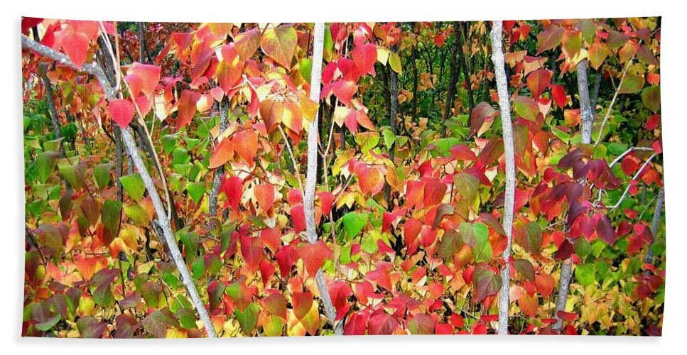 Autumn Hand Towel featuring the photograph Autumn Sanctuary by Will Borden