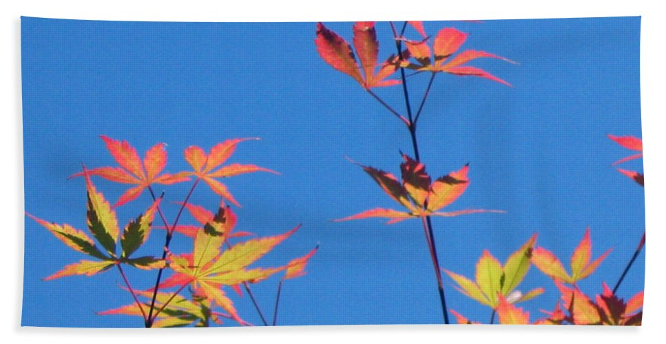 Landscape Hand Towel featuring the photograph Autumn Skies by Dawn Marshall