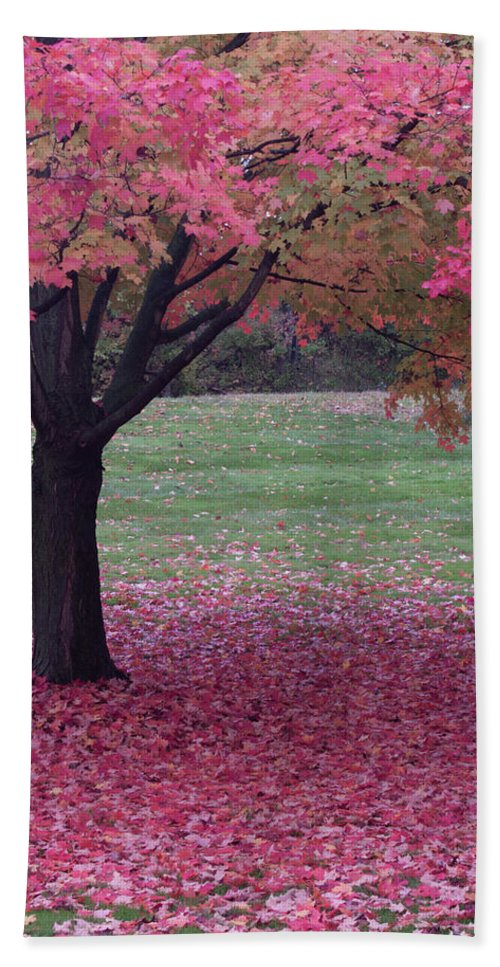 Cleveland Bath Sheet featuring the photograph Autumn by Stewart Helberg
