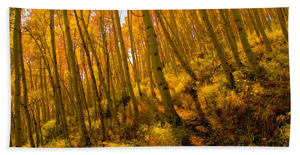 Autumn Bath Towel featuring the photograph Autumn Trail by David Lee Thompson