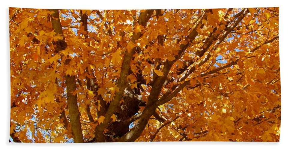 Autumn Hand Towel featuring the photograph Autumn Tree by Sherri Williams