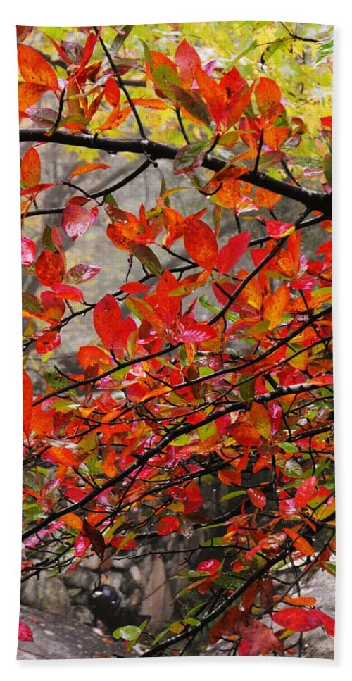 Autumn Trees Rock City Bath Sheet featuring the photograph Autumn Trees Rock City by Lori Mahaffey