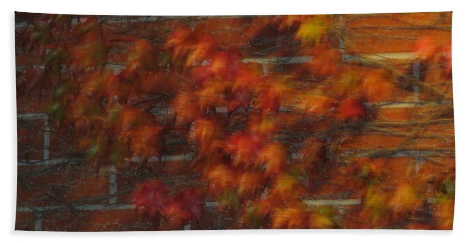 Leaves Hand Towel featuring the photograph Autumn Vines by Cassandra Geernaert