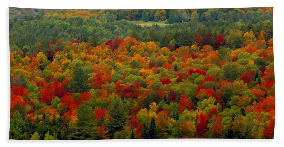 Autumn Bath Sheet featuring the painting Autumns Colors by David Lee Thompson