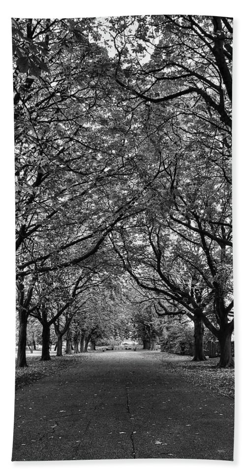 Avenue Hand Towel featuring the photograph Avenue Of Trees Monochrome by Jeff Townsend
