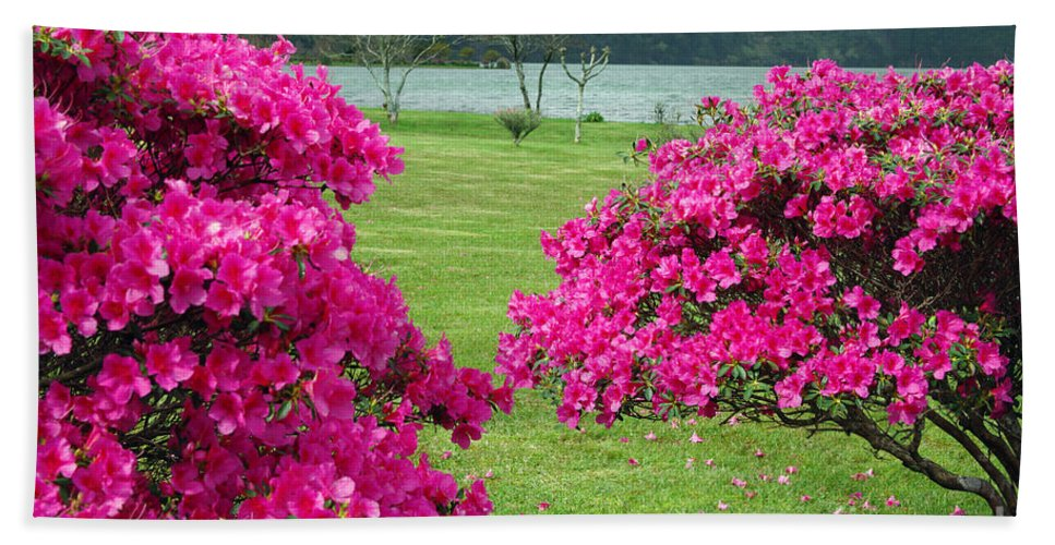 Azaleas Hand Towel featuring the photograph Azaleas At The Azores by Gaspar Avila