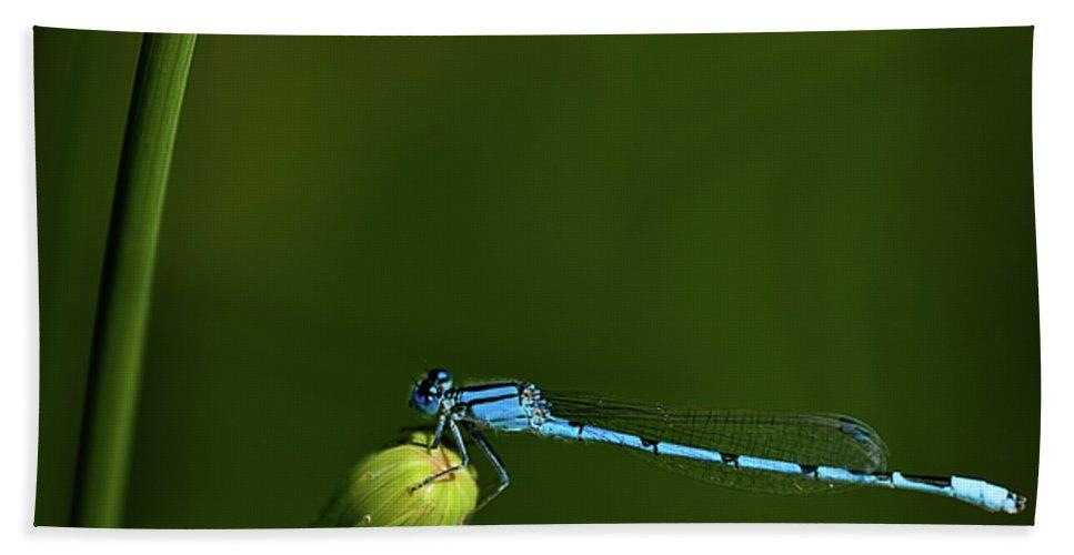 Azure Damselfly Hand Towel featuring the photograph Azure Damselfly-coenagrion Puella by Onyonet Photo Studios