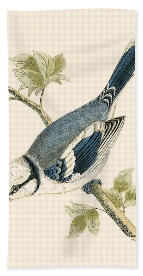 Bird Hand Towel featuring the painting Azure Tit by English School