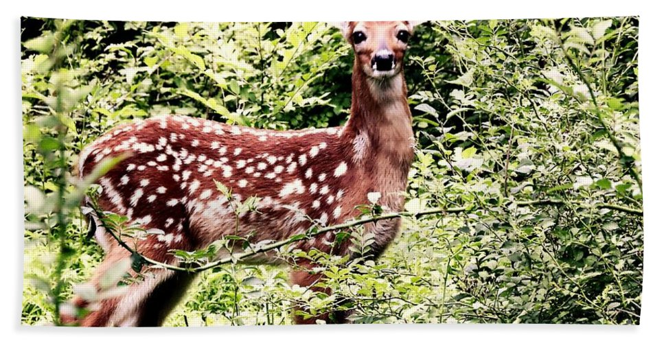 Deer Hand Towel featuring the photograph Babe In The Woods by Tami Quigley