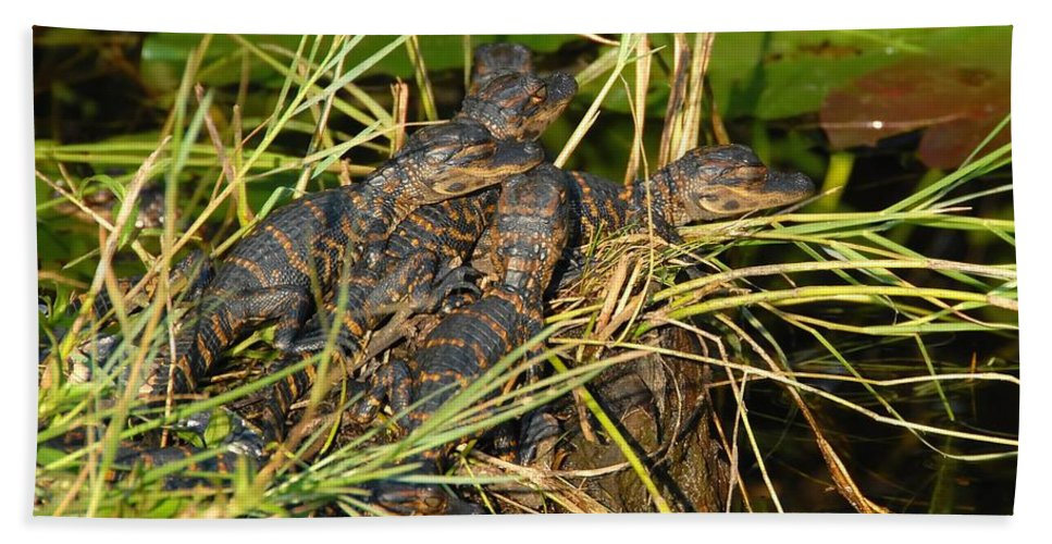 Alligators Hand Towel featuring the photograph Baby Alligators by David Lee Thompson