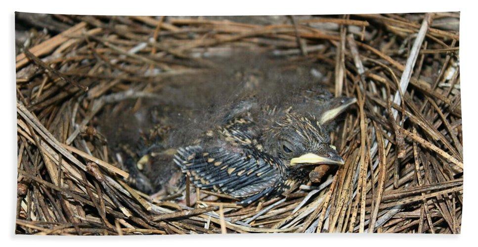 Baby Bath Sheet featuring the photograph Baby Birds by Matthew Farmer