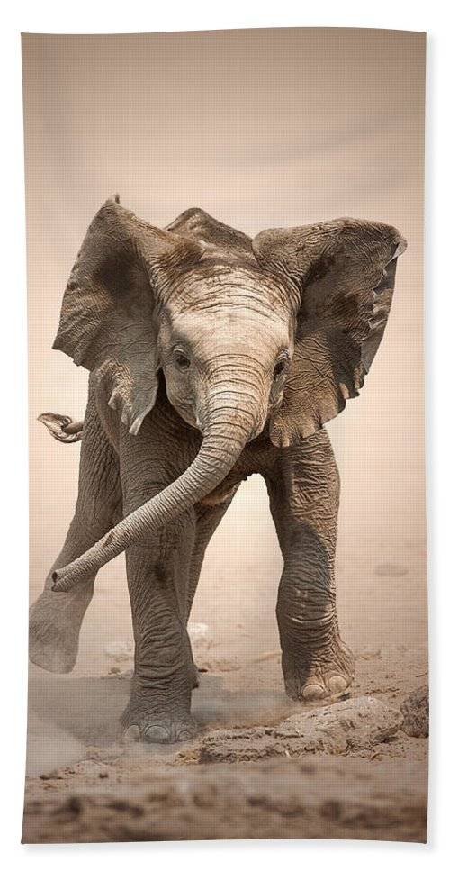 Elephant Hand Towel featuring the photograph Baby Elephant Mock Charging by Johan Swanepoel