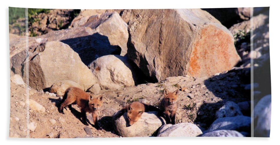 Wildlife Hand Towel featuring the photograph Baby Foxes by Sandra Huston
