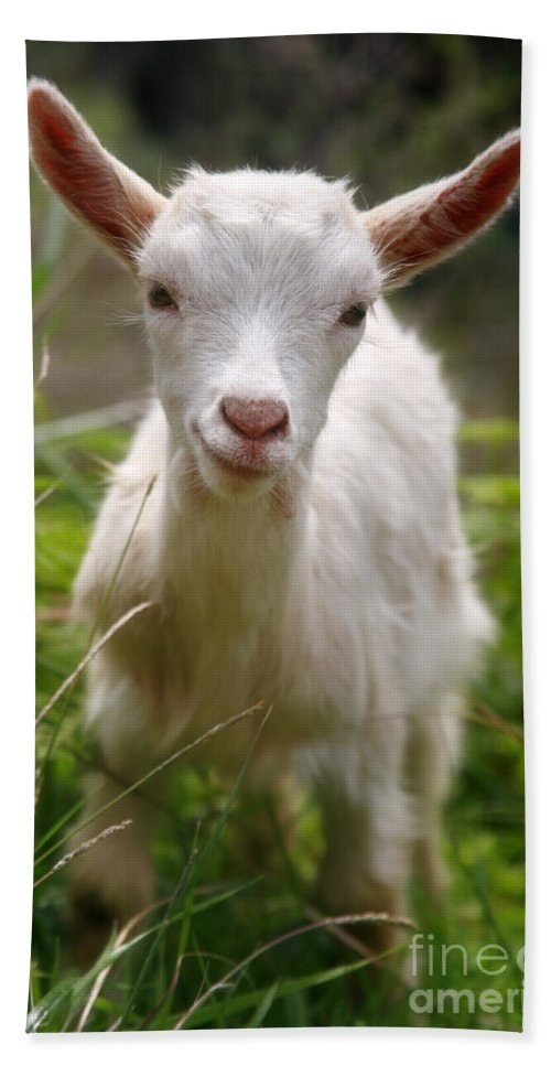 Animals Hand Towel featuring the photograph Baby Goat by Gaspar Avila