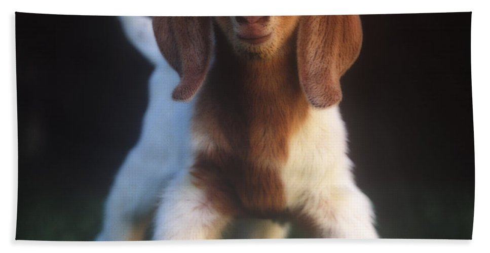 Baby Hand Towel featuring the photograph Baby Goat by Jim And Emily Bush