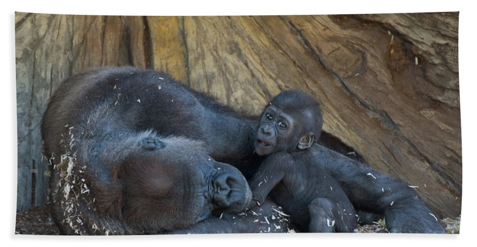 Cute Hand Towel featuring the photograph Baby Gorilla by Andrew Lelea