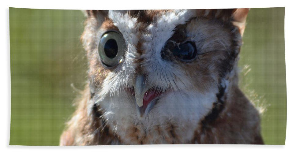 Owl Hand Towel featuring the photograph Cute Screetch Owl by Philip Ralley