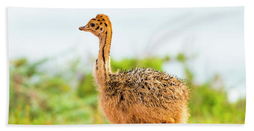 Ostrich Bath Towel featuring the photograph Baby Ostrich by Tim Hester