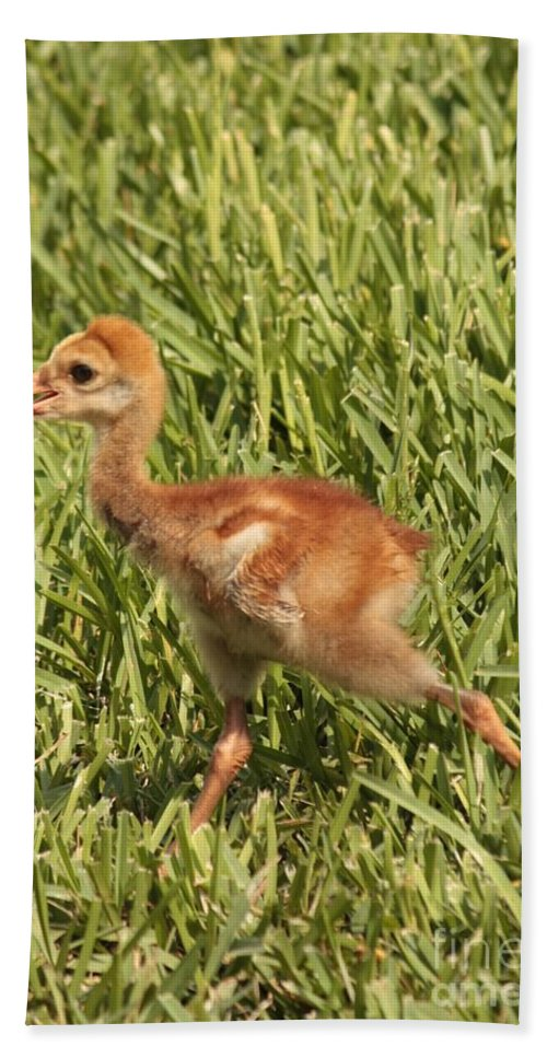 Sandhill Crane Bath Sheet featuring the photograph Baby Sandhill Crane by Carol Groenen