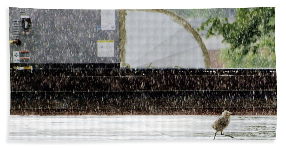 Animal Hand Towel featuring the photograph Baby Seagull Running In The Rain by Bob Orsillo