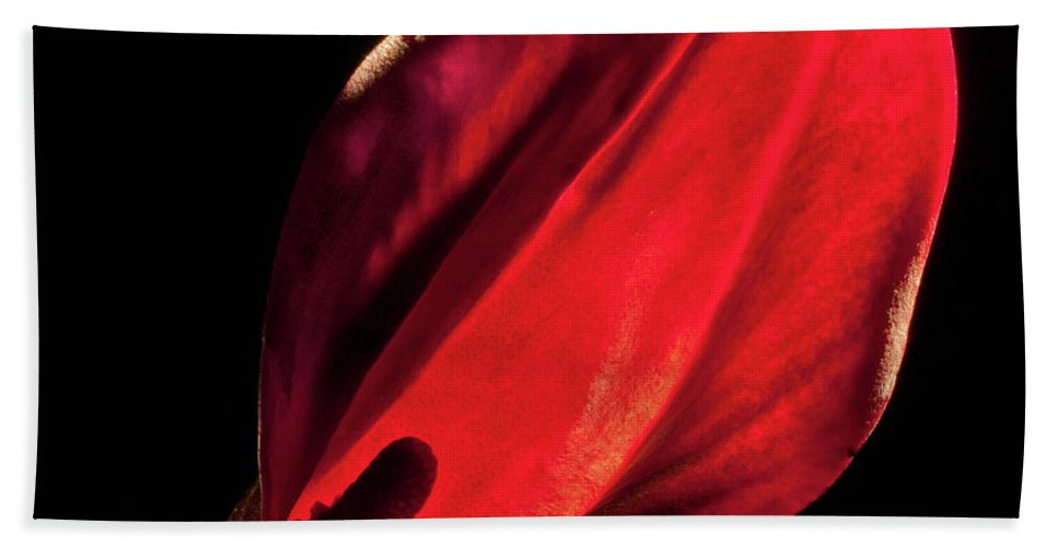 Photograph Hand Towel featuring the photograph Back Lit Black Calla Lily by Frederic A Reinecke