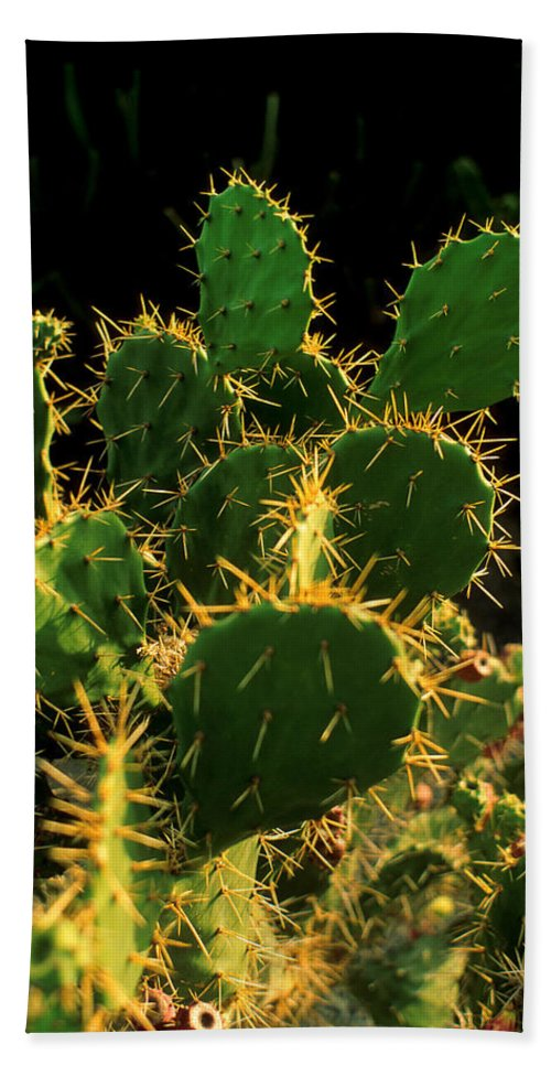 Cactus Hand Towel featuring the photograph Backlit Cacti by Jerry McElroy