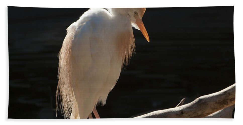 Bird Hand Towel featuring the photograph Backlit Egret by Sandra Bronstein