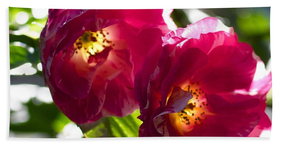 Backlit Roses Bath Sheet featuring the photograph Backlit Roses by Anna Porter