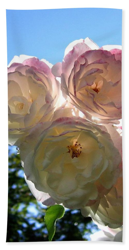 Roses Bath Sheet featuring the photograph Backlit Roses by Will Borden