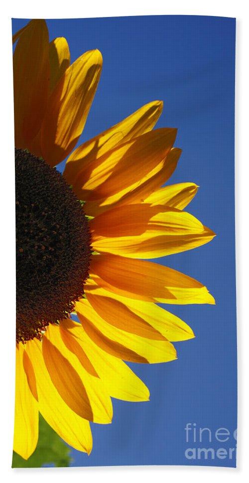 Back Light Bath Towel featuring the photograph Backlit Sunflower by Gaspar Avila