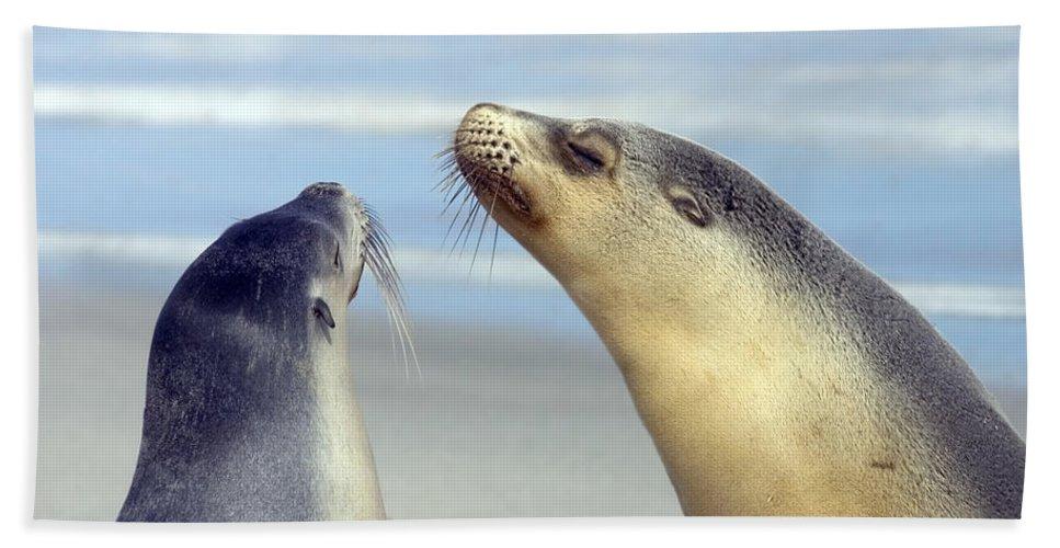 Sea Lion Bath Towel featuring the photograph Backtalk by Mike Dawson
