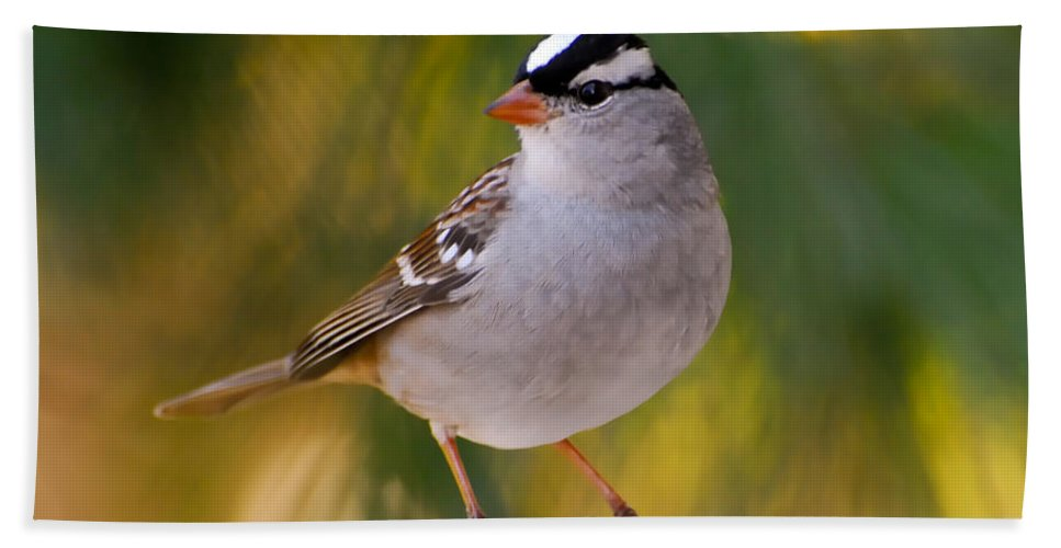 White-crowned Sparrow Hand Towel featuring the photograph Backyard Bird - White-crowned Sparrow by Kerri Farley