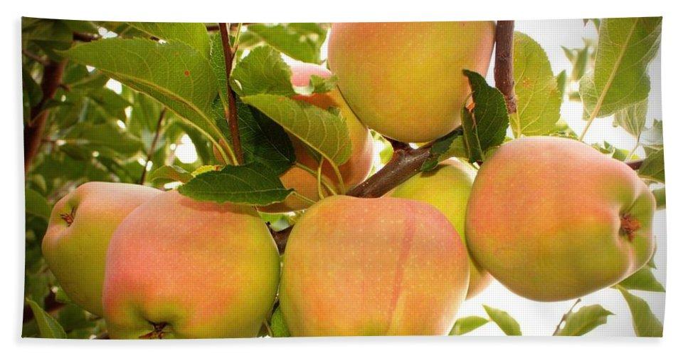 Fruits Bath Sheet featuring the photograph Backyard Garden Series - Apples In Apple Tree by Carol Groenen
